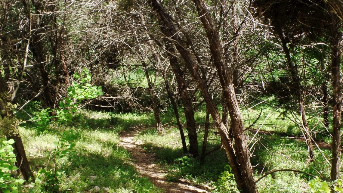 Footpath through Trees on the Healing Trail